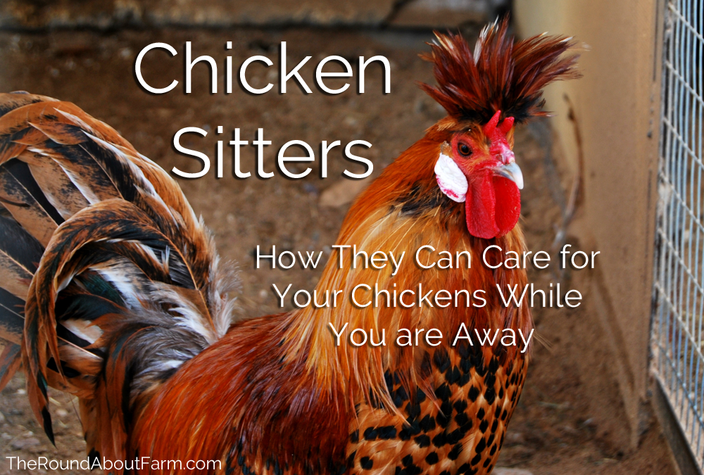 Chicken Sitters Can Care for Your Chickens While You are Away