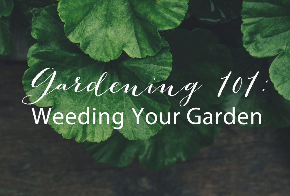 Gardening 101: A Guide to Weeding Your Garden